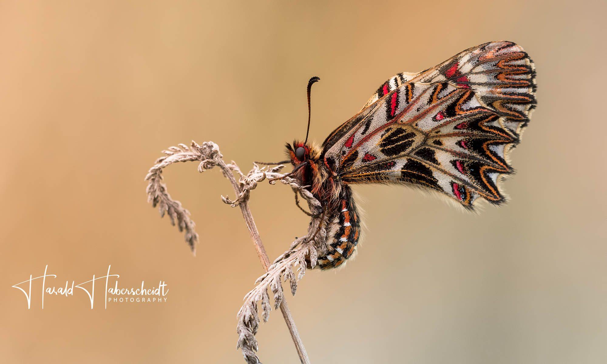 Harald Haberscheidt - Naturfotografie